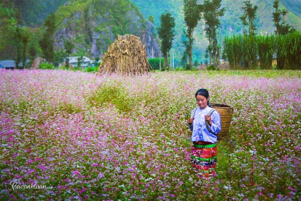 Thiếu nữ dân tộc giữa rừng hoa tam giác mạch