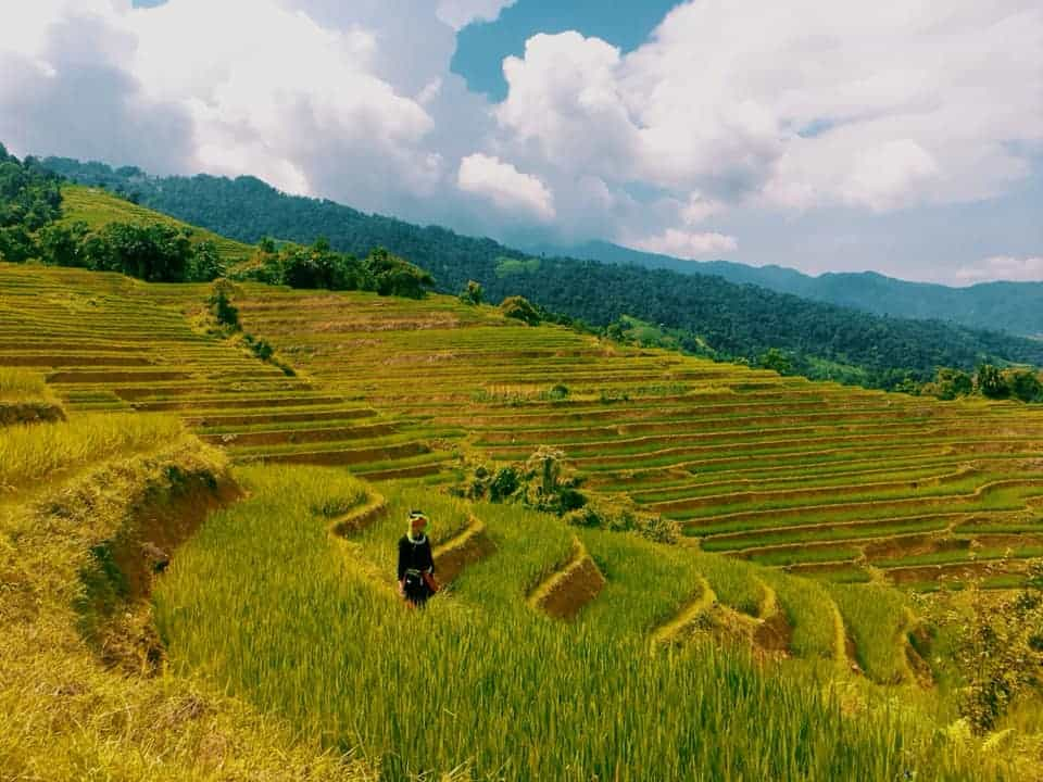 Lúa đòng Hà Giang vào mùa hạ
