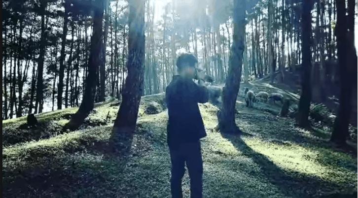 Rừng thông Yên Minh kì bí